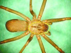 Son Espases niega la muerte de un paciente por la picadura de una araña