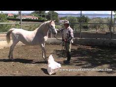 Confiar a un caballo asustadizo con doma natural