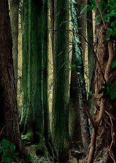 RUUD VAN EMPEL  Study in Green #5 2003  Cibachrome  107 x 150 cm  42.13 x 59.06 inches