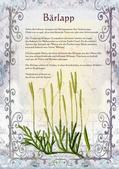 Bärlapp www.kraeuter-verz … … - All About Health Witchcraft Books, Green Witchcraft, Magic Herbs, Poisonous Plants, Baby Witch, Language Of Flowers, Greenhouse Gardening, Medicinal Herbs, Book Of Shadows
