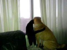 My cat and dog <3