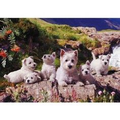 West Highland White Terrier Adult and Puppies Sitting on Rock 1000 Piece Jigsaw Puzzle Gift Idea for a Westie Lover