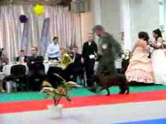 Champion of Champions Dog Show - Bratislava 2007 part 2