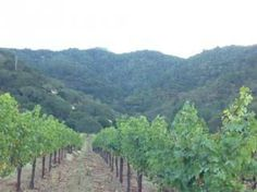 Photo of Vincent Arroyo Winery