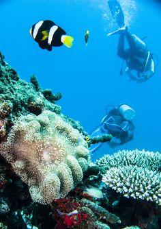 #sub aqua #maldives #thailand #dive center #learn to Dive #scuba diving  (scheduled via http://www.tailwindapp.com?utm_source=pinterest&utm_medium=twpin&utm_content=post13044100&utm_campaign=scheduler_attribution)