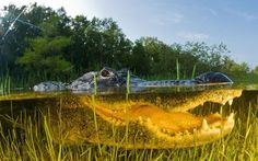 The Everglades in Florida - Astonishing Underwater Photography Best of Web Shrine