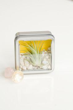 DIY Mini Zen Garden Favor Kits