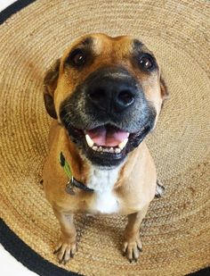 I'm Vega! I'm an adventurous family dog in Townsville. I love to get out and about, but I also wouldn't pass up cuddling next to you on the couch!! I'm the best of both worlds. Come meet me today!