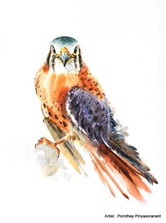 Hey, I found this really awesome Etsy listing at https://www.etsy.com/listing/230325086/hawk-falcon-bird-watercolor-painting