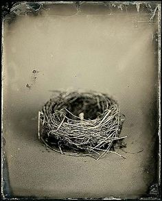 "Joseph Bellows Gallery - Susan Seubert - ""Nests"""