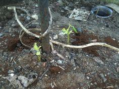 Slug devastation - natural ways to get rid of slugs!