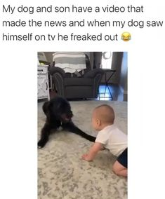 Cute Funny Dogs, Funny Dog Memes, Funny Dog Videos, Funny Animal Memes, Cute Funny Animals, Funny Animal Pictures, Cute Funny Baby Videos, Cute Dogs And Puppies, Baby Dogs