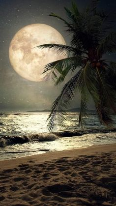 Such a lovely beach night wallpaper for your iPhone X from Everpix! Beautiful Nature Wallpaper, Beautiful Landscapes, Moon Photography, Landscape Photography, Moonlight Photography, Beach Pictures, Nature Pictures, Beautiful Moon Pictures, Nature Images Hd
