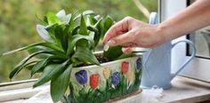 Obyčejné droždí je doslova zázrakem pro růst rostlin! Návod jak ho správně použít!