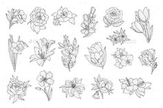 Hand Drawn Monochrome Vector Illustration Original elements to create your own design. Zip contains: PSD / PNG / PDF/ JPEG / AI / I hope you Daffodil Tattoo, Floral Drawing, Hand Drawn Flowers, Tattoo Outline, Flash Art, Flower Doodles, Creative Sketches, Pencil Illustration, Petunias