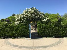 The Huntington #1 - Exploring So Cal -The loveliest place in SoCal