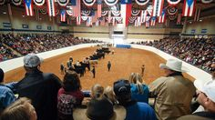 greatest steer show in the WORLD....FORT WORTH <3
