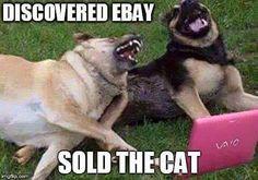 funny animal memes funny dogs Please visit our website, we have a lot of funny a… lustige Tiermemes lustige Hunde Bitte besuchen Sie unsere Website, wir haben viele lustige und interessante Fotos. Funny Animal Quotes, Animal Jokes, Cute Funny Animals, Funny Cute, Funny Sayings, Dog Quotes, Super Funny, Funny Happy, Funny Animal Humour