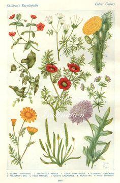 Vintage Antique 1930s Flowers botanical bookplate original lithograph art print illustration to frame 4664