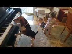 Funny Animal Videos, Funny Animal Pictures, Cute Funny Animals, Cute Baby Animals, Funny Cute, Funny Dogs, Animals And Pets, Funny Images, Cute Puppies