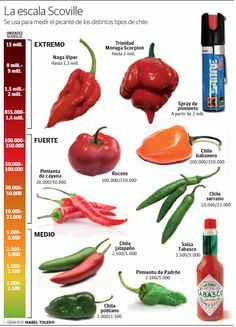 Made in Yle: Il piccante nel cuore Chilli Recipes, Sauce Recipes, Mexican Food Recipes, Types Of Peppers, Herbalife Shake Recipes, Healthy Breakfast For Weight Loss, Hottest Chili Pepper, Food Charts, Stuffed Hot Peppers