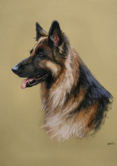 Beautiful German Shepherd Alsation dog LE fine art print from an original soft pastel sketch