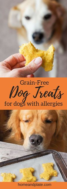 Bake up dog treat recipe that is pup-approved and grain-free specifically made for dogs with allergies.Bake up dog treat recipe that is pup-approved and grain-free specifically made for dogs with allergies. Dog Treats Grain Free, Diy Dog Treats, Healthy Dog Treats, Grain Free Dog Food, Dog Biscuit Recipes, Dog Treat Recipes, Dog Food Recipes, Dog Biscuit Recipe Grain Free, Home Made Dog Treats Recipe
