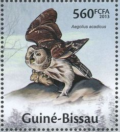 Northern Saw-whet Owl stamps - mainly images - gallery format