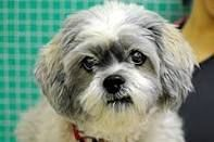 Pet for Fred. Male puppie