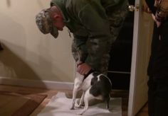 """Lacey """"can't believe it"""" when she is surprised by her soldier coming home.  Related: Dogs smother their US Airman dad with hugs (video) US Airman welcomed home by beagle and Golden Doodle puppy (video) Special needs dog welcomes home her Airman dad (video)"""