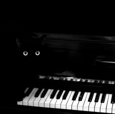 black cat on piano keys