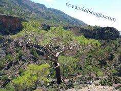 Website: www.visitsougia.com  ☀️☀️⛵⛵☀️☀️⛵⛵☀️☀️⛵ #greek #crete #creteisland #chania #crète #cretelife #greekpride #hraklion #κρητη #lifeofadventure #greece #greekislands #greekgirl #southeurope #neverstopexploring #greekfood #greeceislands #greeklife #oliveoil #creteisland #sougia #elafonisi #palaiochora #chorasfakion #ilovegreece #bestvacations #travelawesome  ☀️☀️☀️☀️☀️☀️☀️☀️☀️☀️ Follow @visitsougia 👈👈 Photo @mvittorakis👏👏