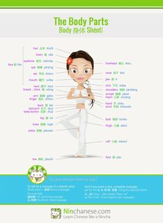 Chinese vocab: body parts |