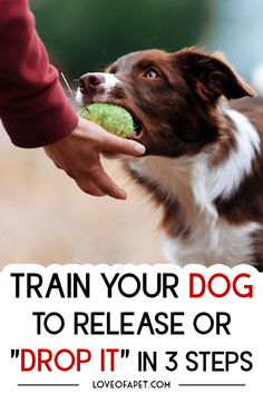 As a pet owner having an idea of how to teach your dog the drop it command is very important. This command is beneficial in so many ways. Training Your Puppy, Dog Training Tips, Training Pads, Pet Dogs, Dogs And Puppies, Dog Commands, Dog Potty, Dog Hacks, Dog Leash