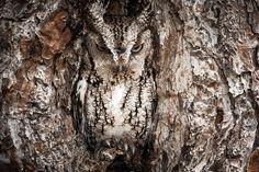Consegue Descobrir os Animais Camuflados Nestas Fotografias? | National Geographic