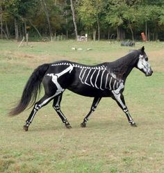 Ride your Horse for trick or treating as a skeleton this Halloween!