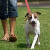 Problems Walking Your Dog?  Helpful tips from Cesar Millan.