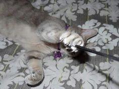 Cat named Faith dbowsm