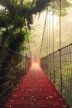 Fog Bridge, A hanging bridge from Monteverde Cloud Forest in Costa Rica- wonder how far this is from uncle steves?