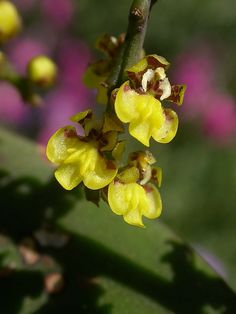 More micro-orchids | Flickr - Photo Sharing!