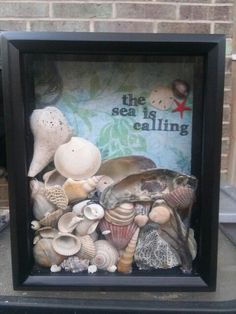 DIY Shell Display - perfect for those shells from beach trips! Description from pinterest.com. I searched for this on bing.com/images