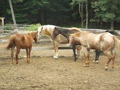 Rocky Ridge Ranch Affordable horseback riding and horsemanship clinics.