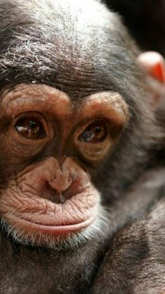 A platform for people who love animals. Cute Funny Animals, Cute Baby Animals, Animals And Pets, Primates, Beautiful Creatures, Animals Beautiful, Types Of Monkeys, Tier Fotos, Animal Photography