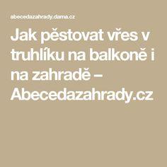 Jak pěstovat vřes v truhlíku na balkoně i na zahradě  – Abecedazahrady.cz
