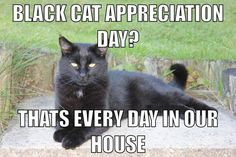 Black Cat Appreciation Day...is every day!