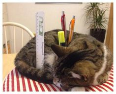 #chat porte-crayons