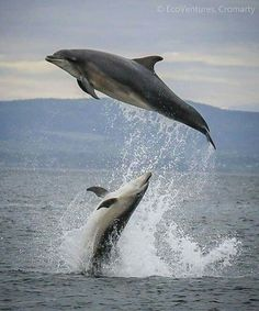 Dolphins ❤️