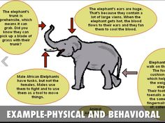 animal's adaptation examples - Cerca con Google