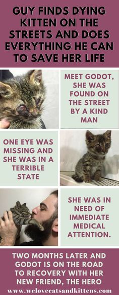 See how one man's kindness saved the life of a tiny kitten. See how one man's kindness saved the life of a tiny kitten. Kittens Cutest, Cats And Kittens, Cute Cats, Funny Cats, Foster Kittens, Tiny Kitten, Find Friends, Funny Cat Videos, Save Her