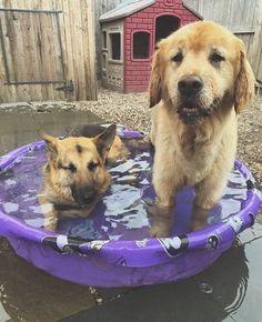 Having fun in the pool http://ift.tt/2djMdSr